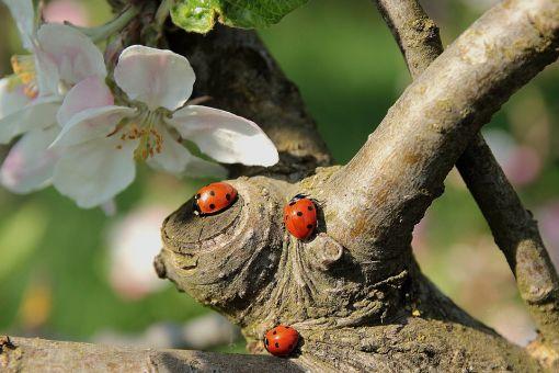 uğur böceği ile ilgili görsel sonucu
